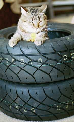 Fat cat in new tires